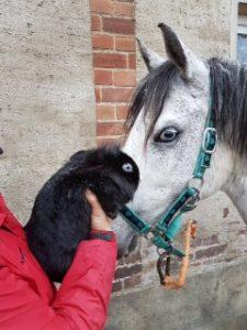 Birkauge an Birkauge I Pony und Zwergkaninchen