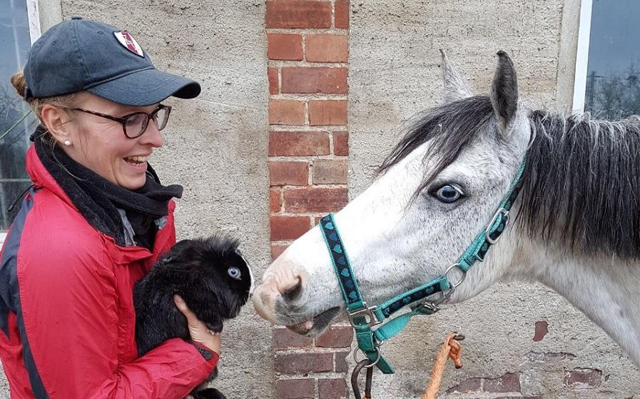 Pony und Osterhase